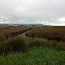 Salt Marsh at Elk River Slough